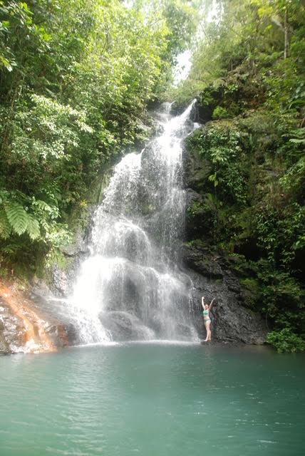 Tiger Fern - upper waterfalls