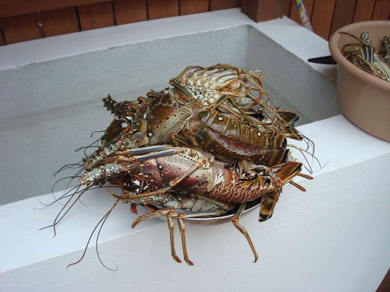 Lobster for dinner!